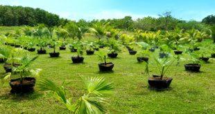 plantasforestales
